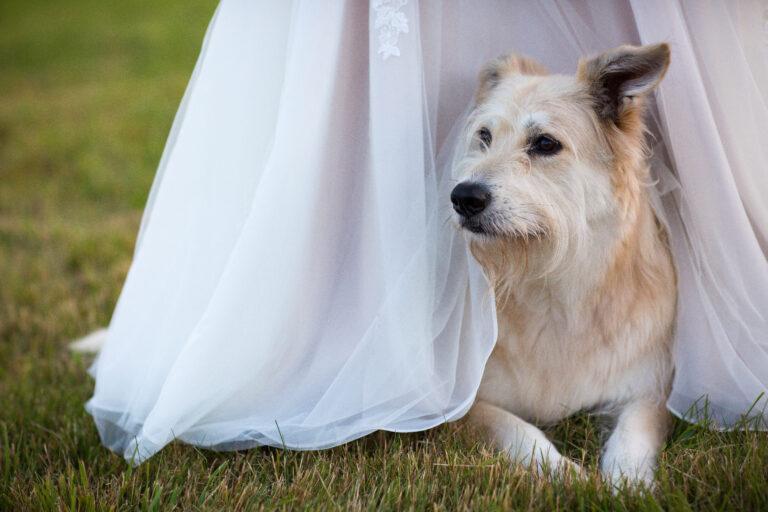 Dog Friendly weddings Vermont photo by Lindsay Raymondjack
